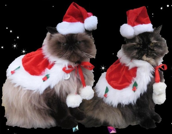 Christmas Cat Santa Costumes