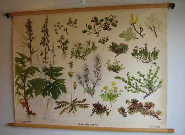Vintage 40s Swedish Botanical Poster Educational Chart