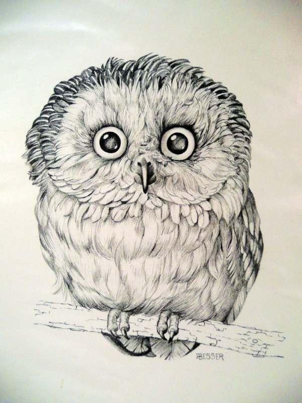 Owl Art Print Drawing Besser Printed Cunningham