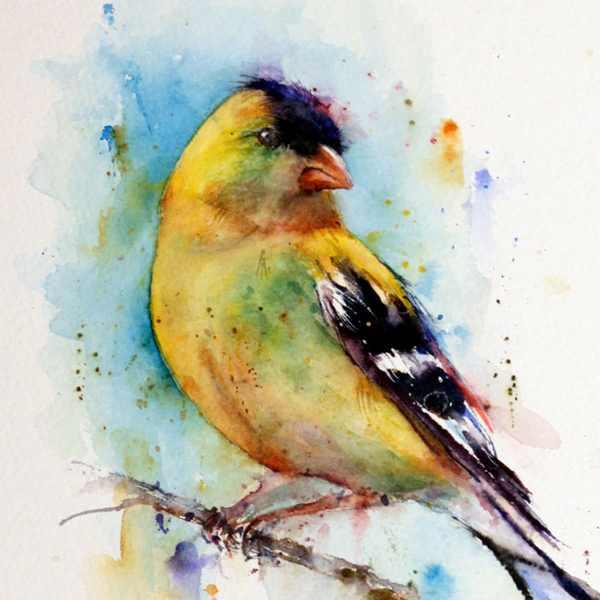 Golfinch Watercolor Bird Print Dean Crouser