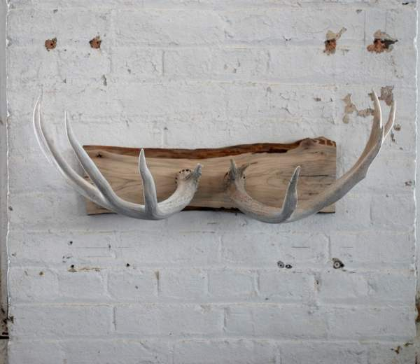 Deer Shed Antler Wall Mount