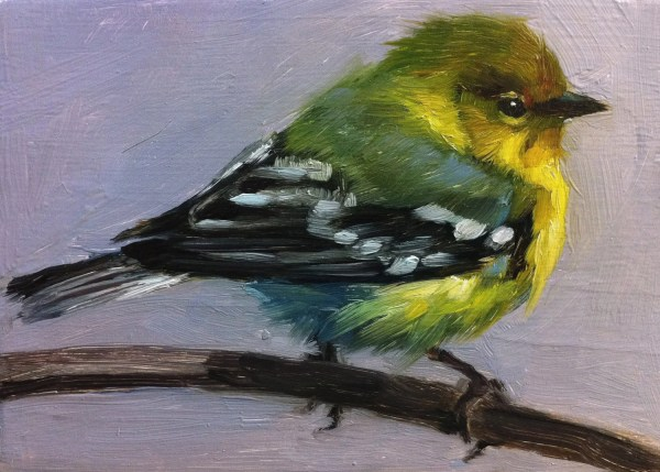Tiny Pine Warbler Little Bird Painting Open Edition Print