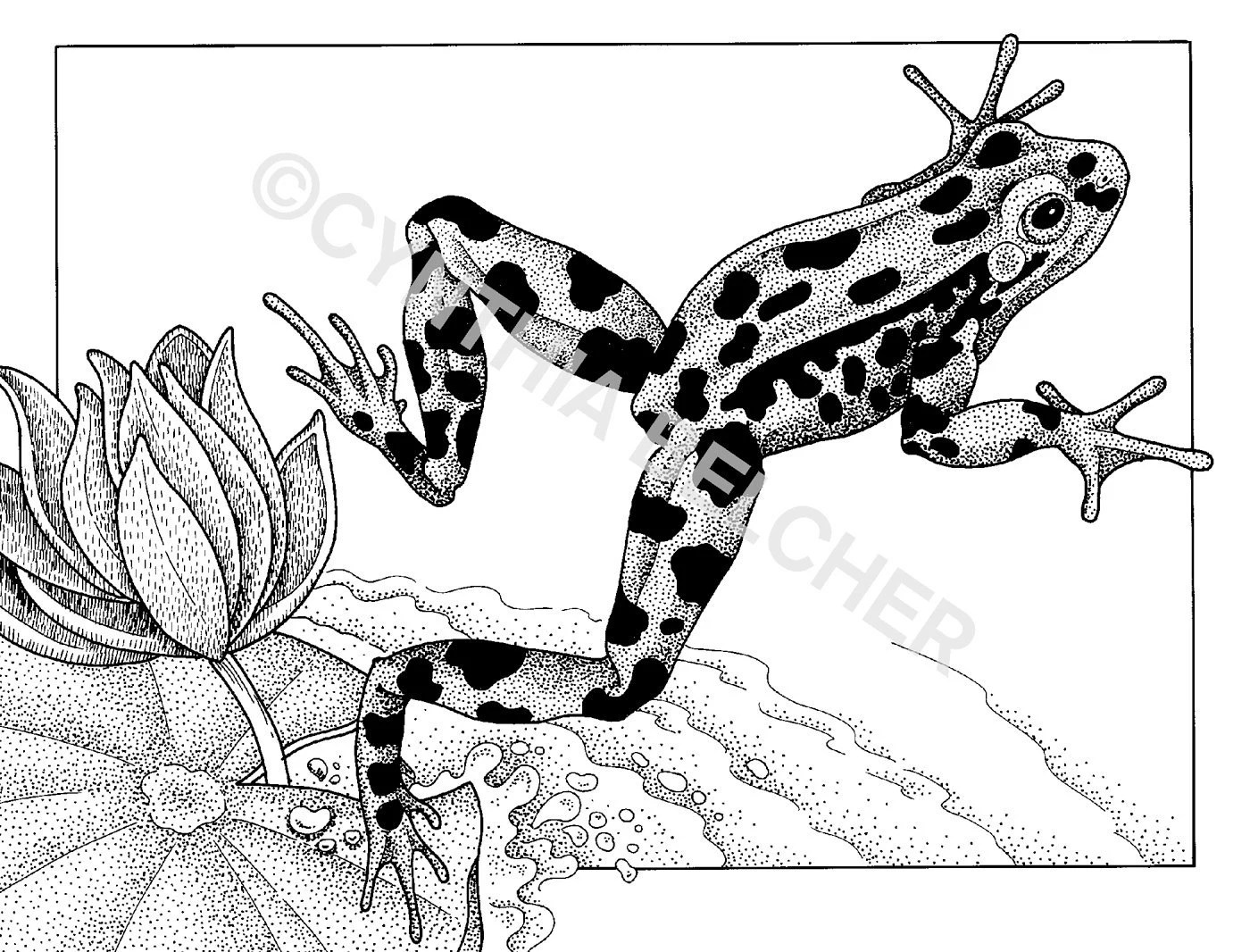 Pen and Ink Drawing of a Jumping Leopard Frog by ARTSYwildlife