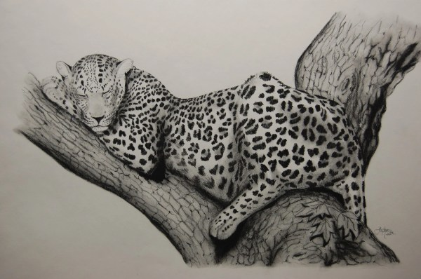 Sleeping Leopard 18x23.5 Original Charcoal