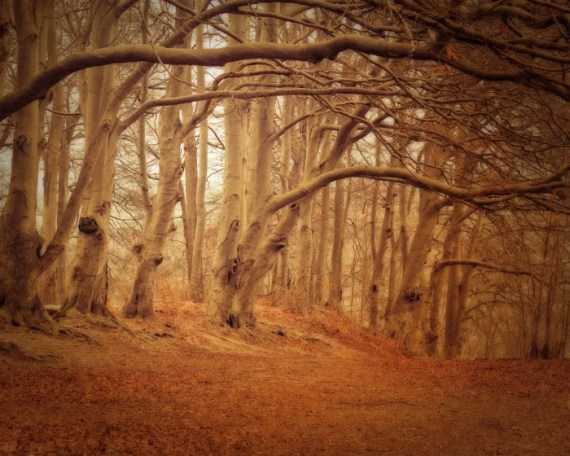 Trees / nature photograph -Hiawatha's Childhood, Forest Scene in England - KeriBevan