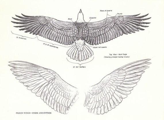 vintage eagle pigeon wings book