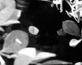Phoebe - Fine Art Photography - In Stock - 8x10 - SweetMomentsCaptured