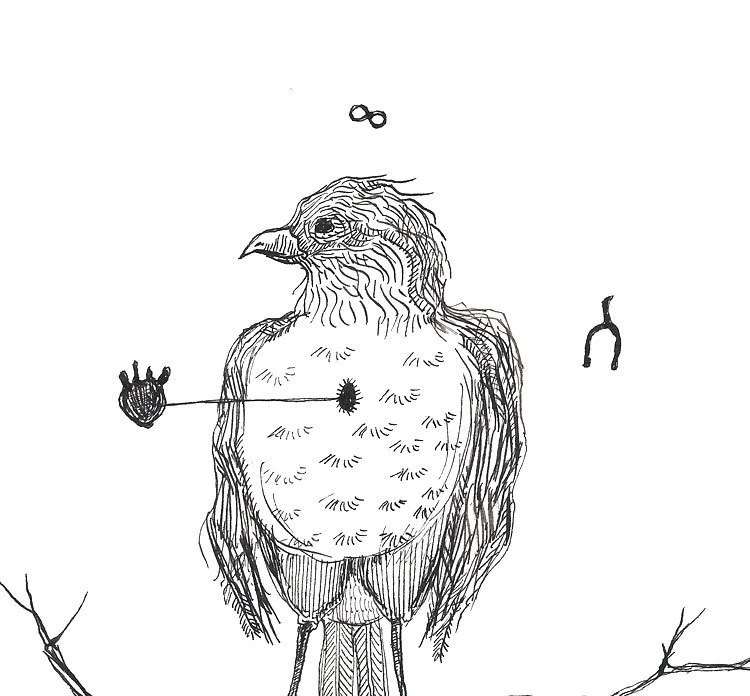 robin black and white bird drawing pen and ink harbinger