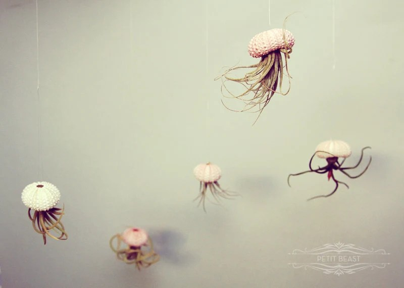 Jellyfish Air Plant by PetitBeast