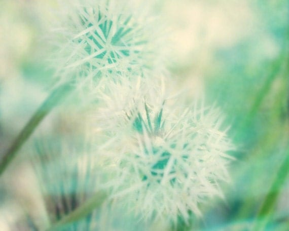 Cute Turquoise Wallpapers Dandelion Abstract Art Print Aqua Green White Flower Floral