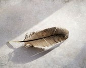 """Feather 5"""" X 7"""" Feather Print, Turkey Feather Print, Feather, Sunshine, Sunray, Light - BeneathNorthernSkies"""