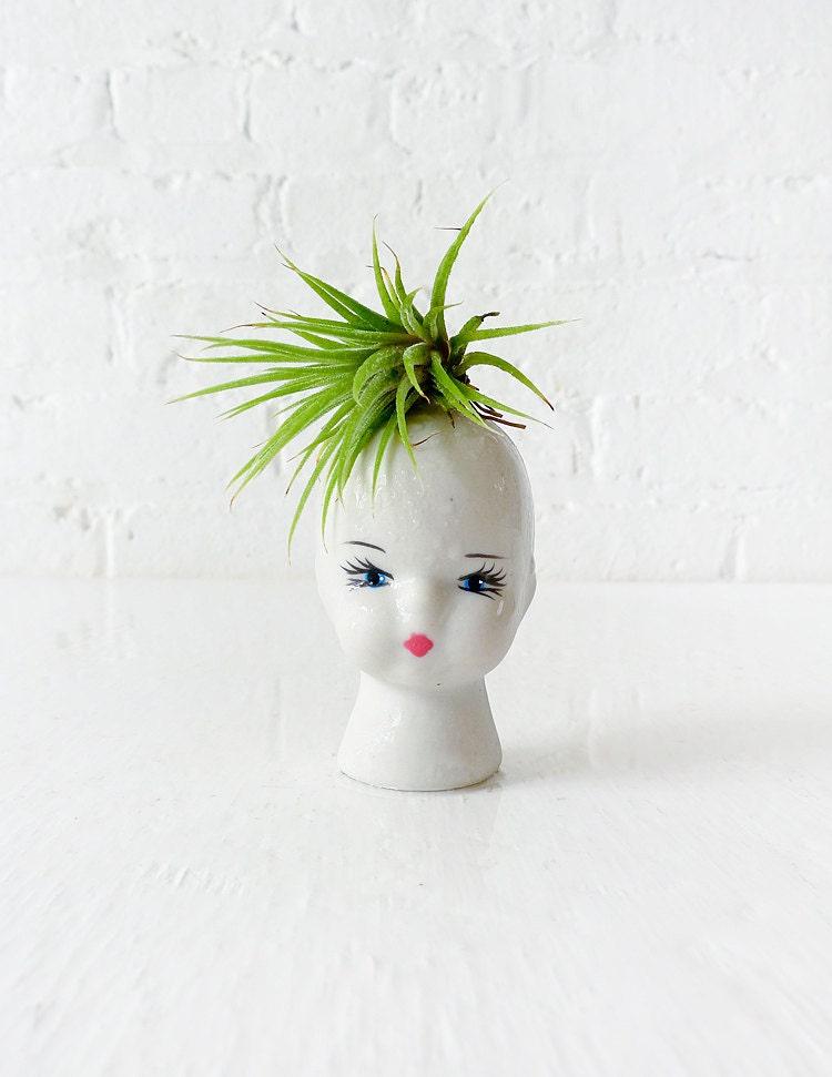 Air Plant Garden on Porcelain Doll Head