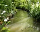 Monet's Garden - 'Lightplay' Photographic Print  - Giverny France - AtelierBelleVie