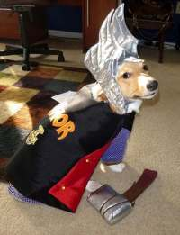 Custom-made cats costumes made to order only. Thor for a cat