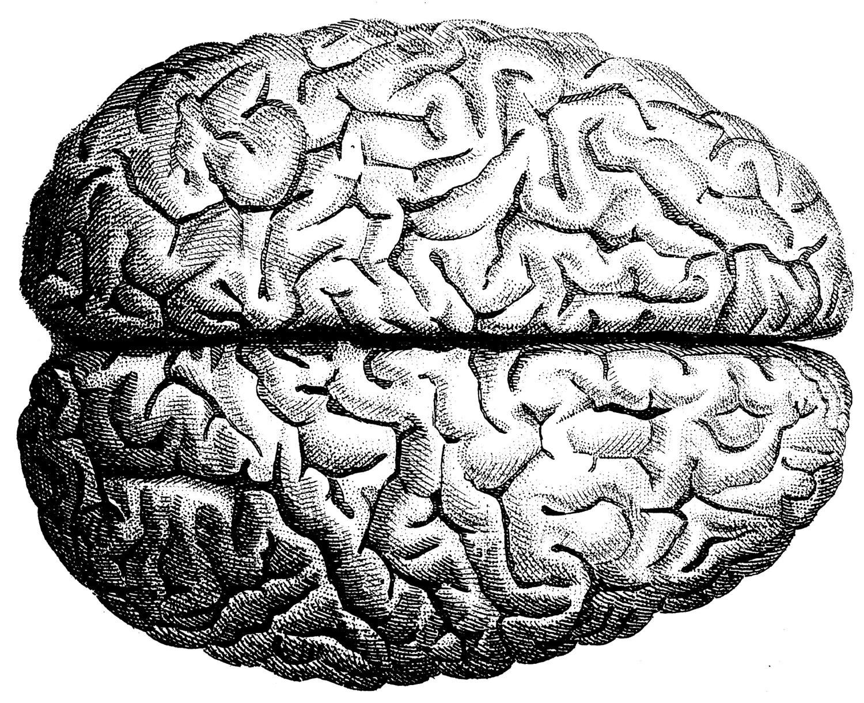 The Human Brain Human Anatomy The Human Skull Old