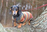 dachshund clothes dachshund dog clothes dachshund by ...