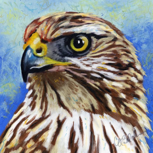 Hawk Drawing Colored