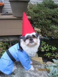 Custom Made/Order for Traveling Gnome Dog Halloween Costume