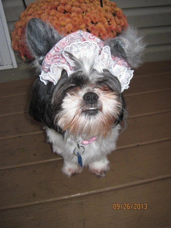 Granny Big Bad Wolf Dog Halloween Bonnet Size Small Medium