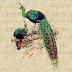 Peacock Bird Diagram 2002 Mitsubishi Lancer Stereo Wiring Pair Green Birds Instant Digital Download Image