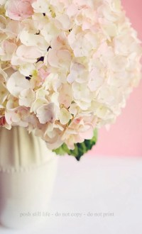 Nursery Wall Art White Cream Pink Hydrangea 16x20 by ...