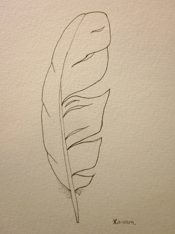 Sea Bird Feather Original Ink Drawing