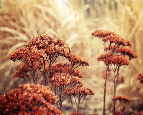 Autumn Landscape Photograph rust burnt umber sienna golden fall grasses home decor chestnut - FirstLightPhoto