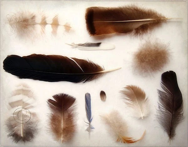 Feathers 11