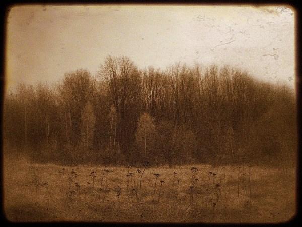 Landscape Fall Trees Autumn Haunted Woods