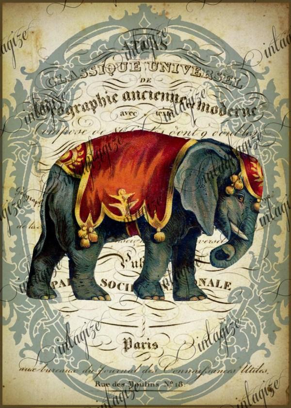 Elephant Printable Original Print French Circus
