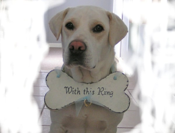RING BEARER Dog Bone by Route17WestWeddings on Etsy