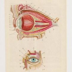 Eye Anatomy Vintage Diagram 2002 Chevy Silverado Wiring Radio 2 Anatomical Prints Bones Skull Medical Diagrams
