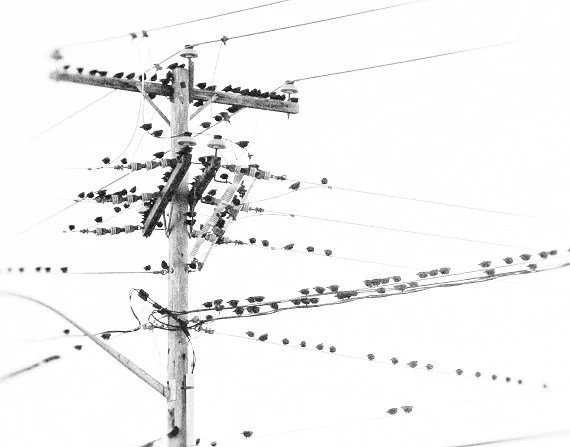 Items similar to Birds on a Wire Minimal Black and White