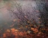 nature photography orange leaves autumn fine art photograph home decor office decor - judeMcConkeyPhotos