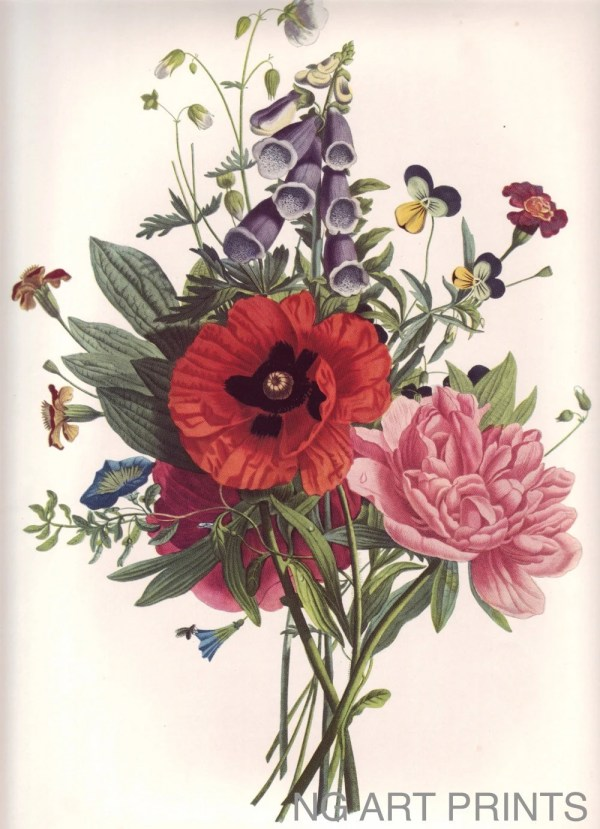 Vintage Flower Print Large Rose Botanical Ngartprints