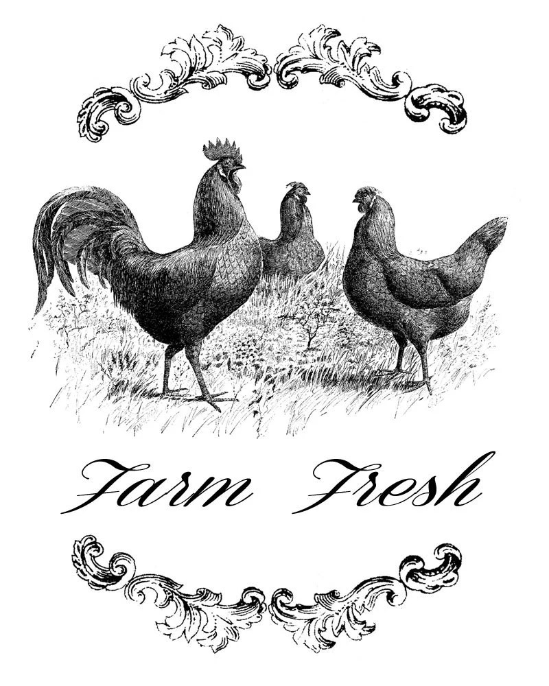 Farm Fresh Three Chickens Vintage Transfer Image Chicken