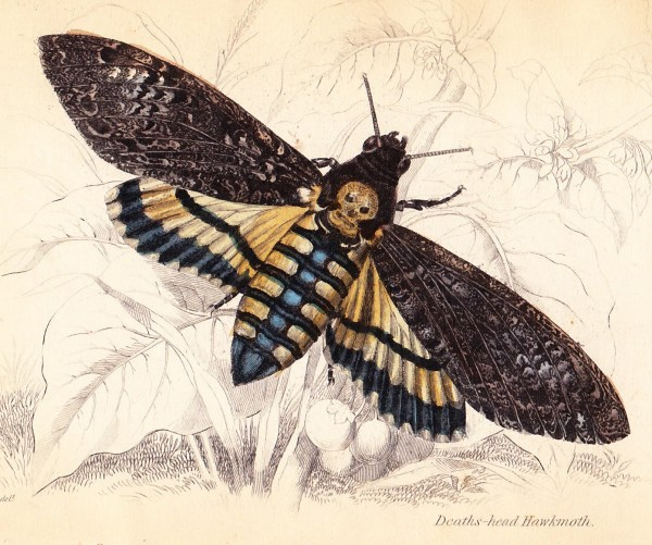 20 Vintage Honey Bee Prints Pictures And Ideas On Meta Networks