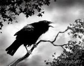 Crow raven art print, bird art, animal wildlife corvid caw, wildlife, - lewfoster