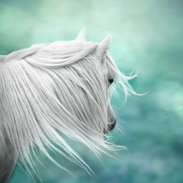 Fantasy Art Surreal Horse Magical Nursery Girls