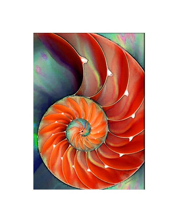 Items similar to Nautilus Shell Art PRINT Red Orange Sea