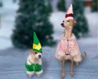 Buddy the Elf Christmas Holiday dog or cat costume