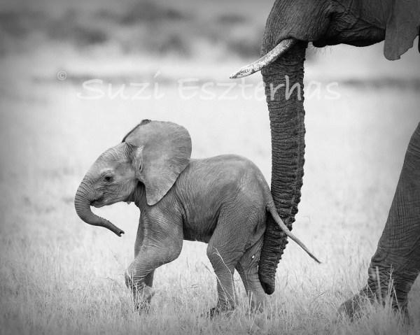 Baby Animal Nursery Art Print Elephant Black