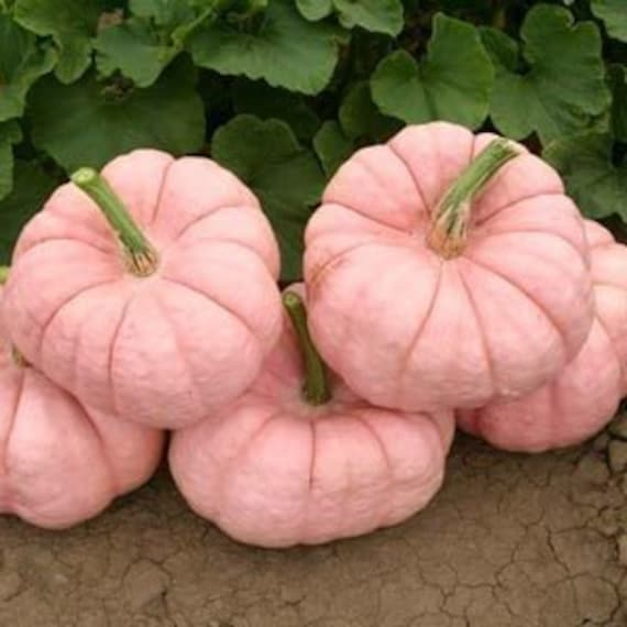 Pink Pumpkins Porcelain Doll Breast Cancer Awareness Fund