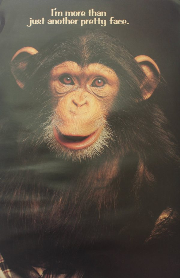 Nos Chimpanzee Funny Monkey Poster 1982 Office