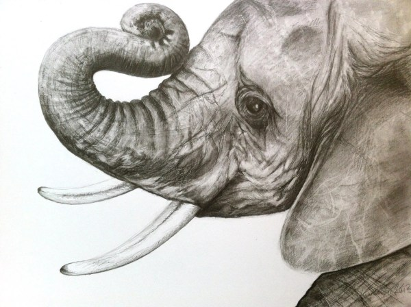 Print Baby Elephant Head Drawing In Graphite
