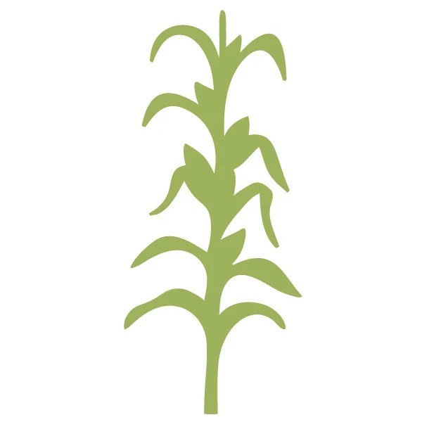 cornstalk wall stencil painting