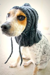 Custom knit dog hat dog hoodie pet scarf pet clothes dog