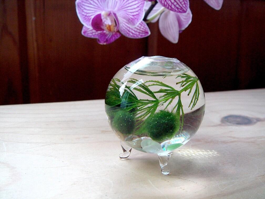 SALE! Zen Nano Orb Marimo Ball Ecosphere Terrarium From