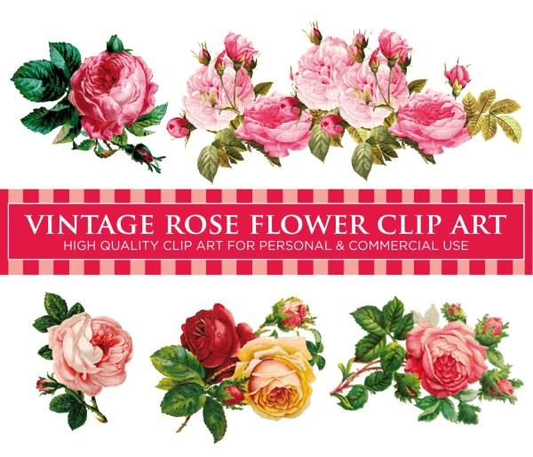 5 vintage rose flowers pack