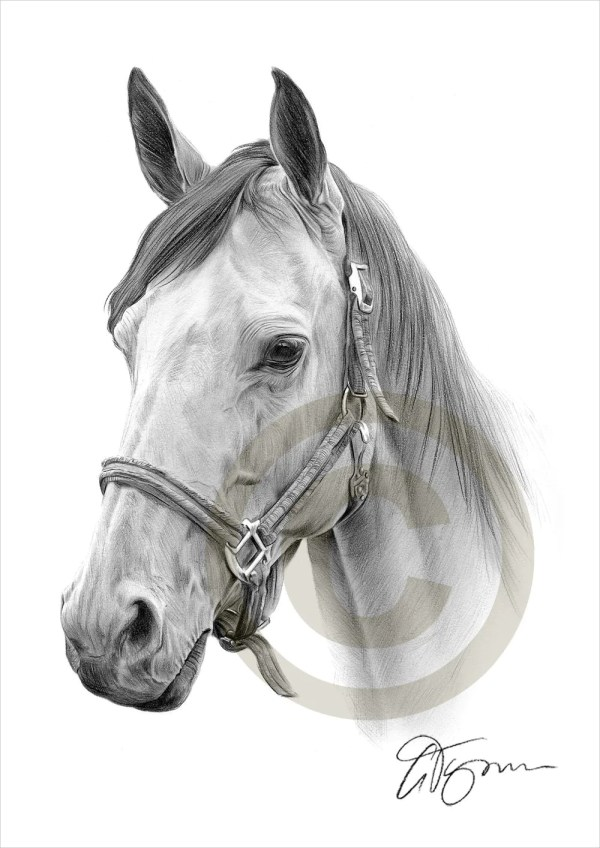 Horse Pencil Drawing Print A4 Size Artwork Signed